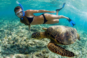 snorkeling with honu (sea turtle) in Kona, Hawaii