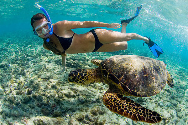Snorkel Als Allow You To Swim With Hawaiian Sea Turtles